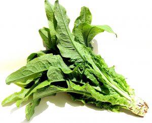 機能性野菜(チシャトウ)粉末原料発表会を開催 (株)グラート