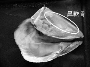 『編集部オススメ素材3』 関節系や美容系素材のプロテオグリカン